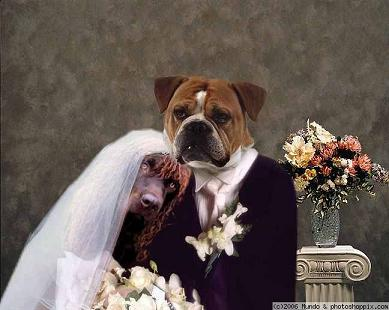 doggie_wedding